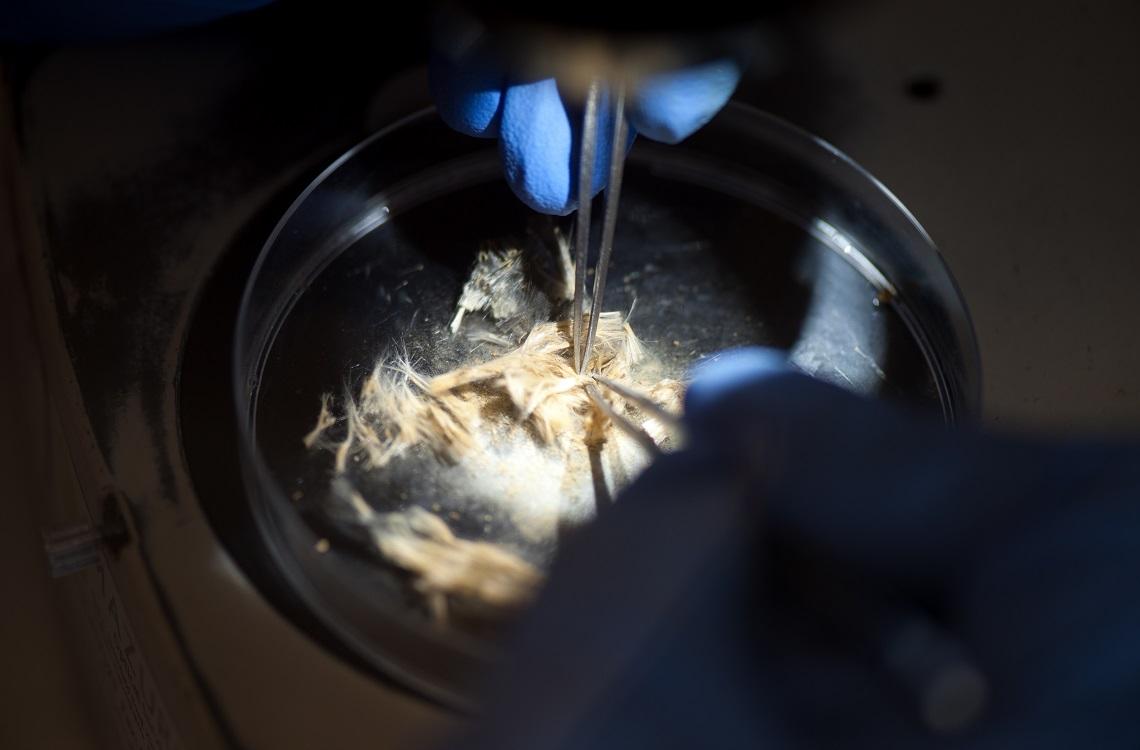 life asbestos sample